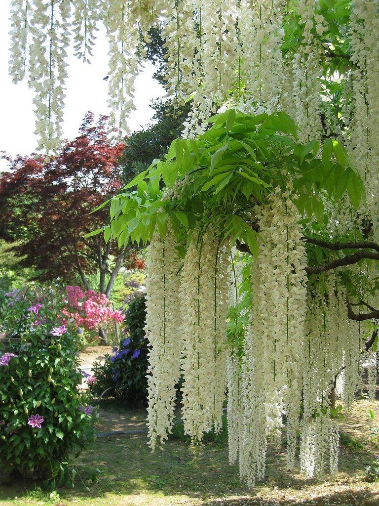 Парк квітів Асикага