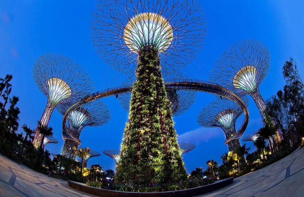 Дивовижні супер-дерева/Удивительные супер-деревья
