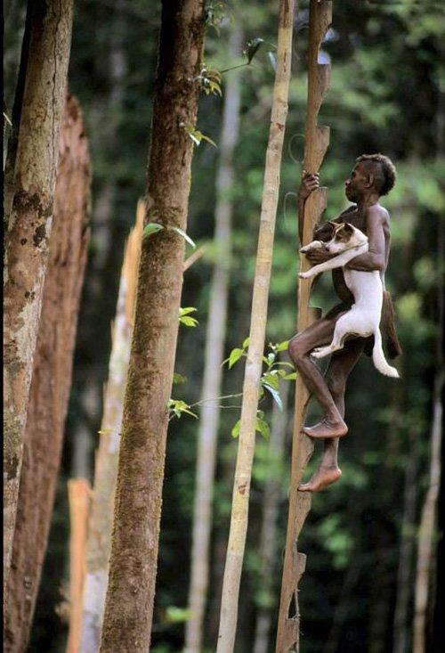 Хижины на деревьях