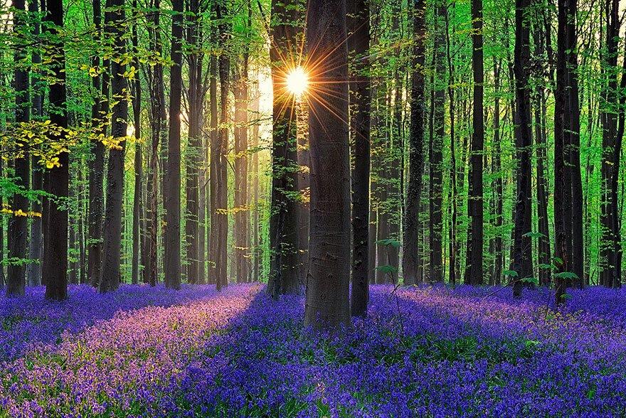 Лес в Бельгии