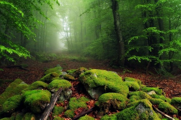 Неземная красота пейзажей мира