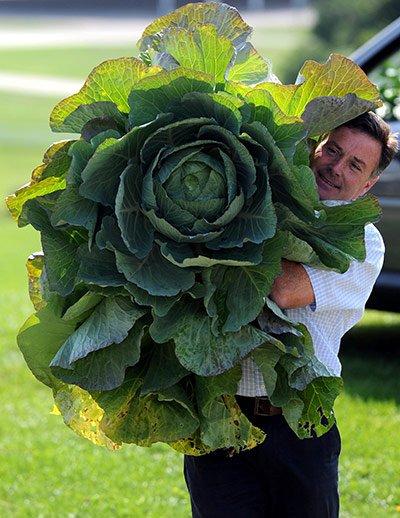Овощи-гиганты - фото 1