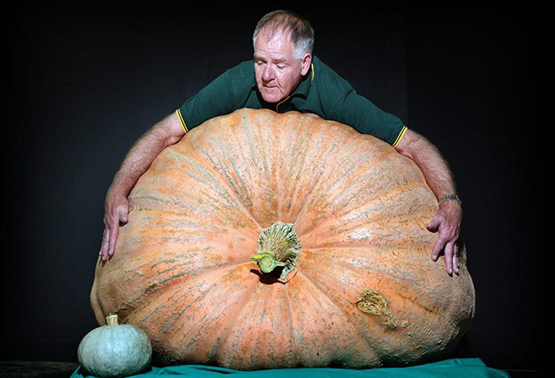 Овощи-гиганты - фото 3