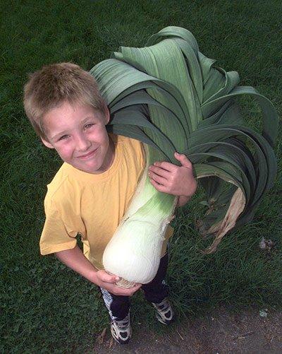 Овощи-гиганты - фото 9