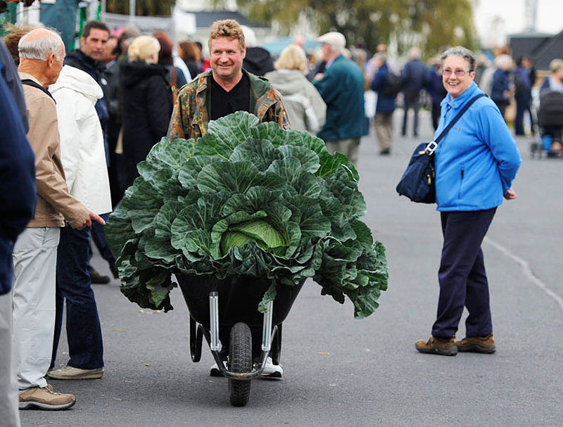 Овощи-гиганты - фото 2