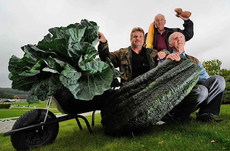 Овочі-гіганти - фото 14