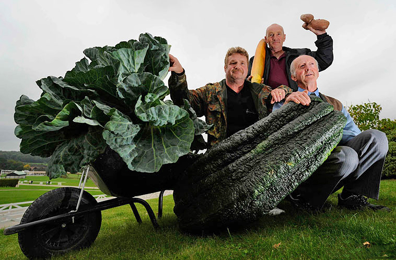 Овощи-гиганты - фото 14
