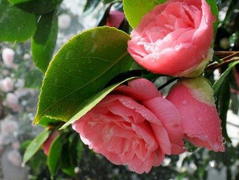 Самые редкие цветы мира – фото 1