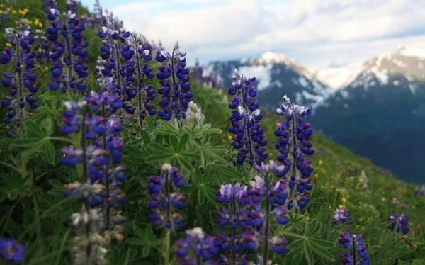 Самые редкие цветы мира – фото 7