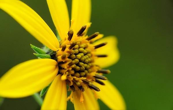 Самые редкие цветы мира – фото 8