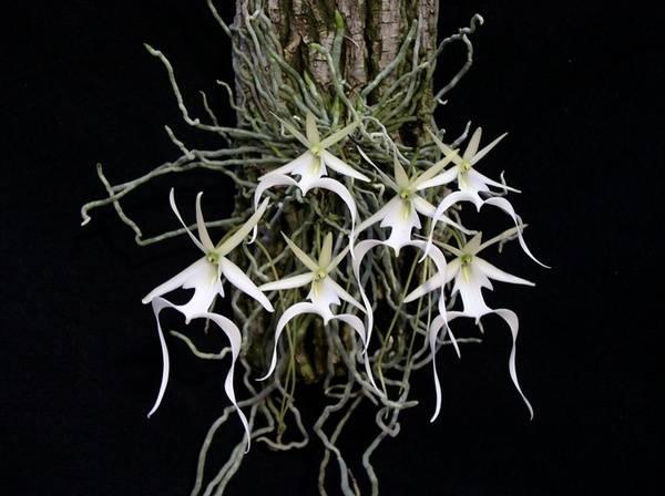 Самые редкие цветы мира – фото 11