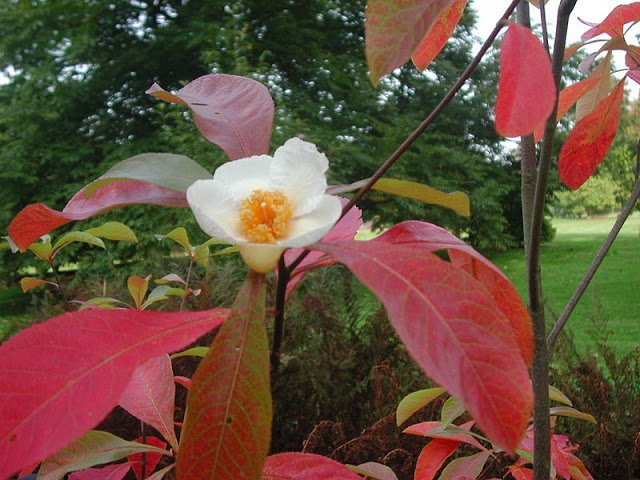 Самые редкие цветы мира – фото 2