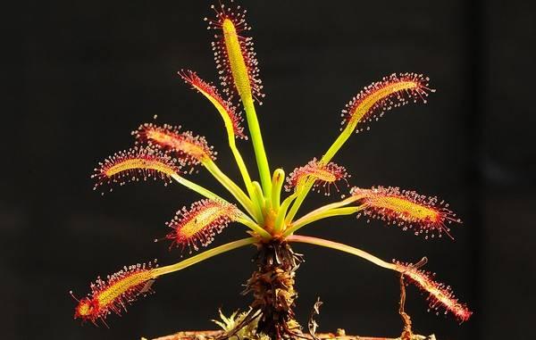 Самые редкие цветы мира – фото 3