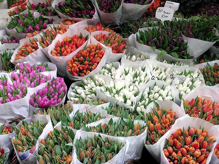 країна тюльпанів