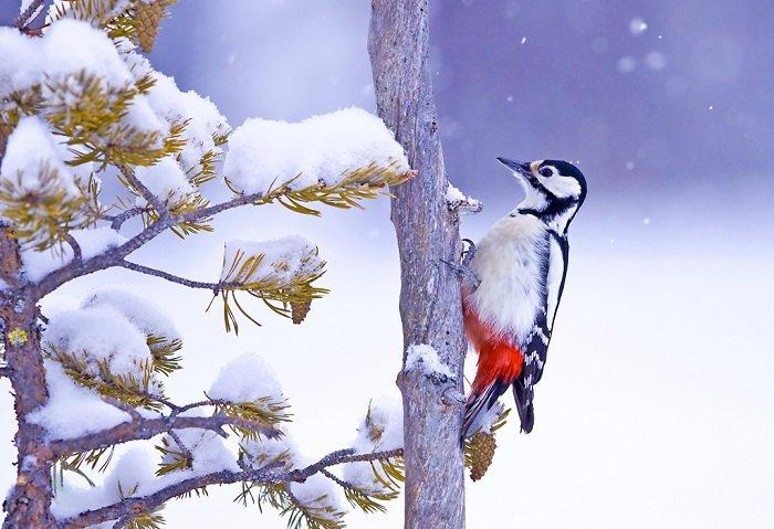 Зимующие птицы Украины, фото 4