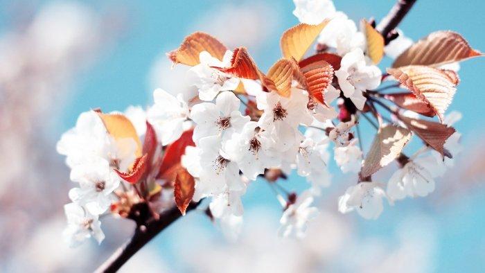 Пословицы и поговорки о весне - фото 4