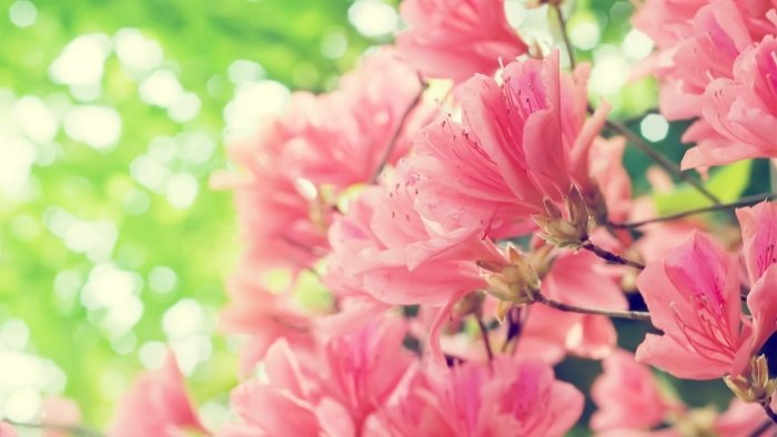 Пословицы и поговорки о весне - фото 6