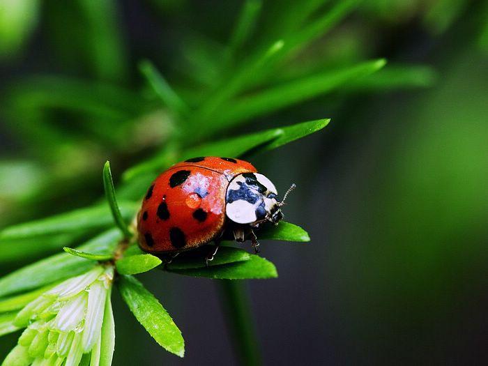 Как насекомые готовятся к зиме, фото 2