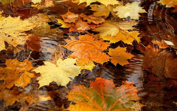 Стихи про осень на украинском языке