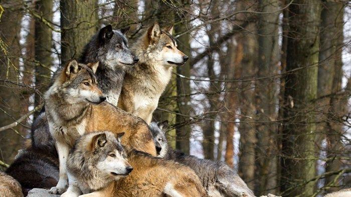 Как звери готовятся к зиме, фото 4