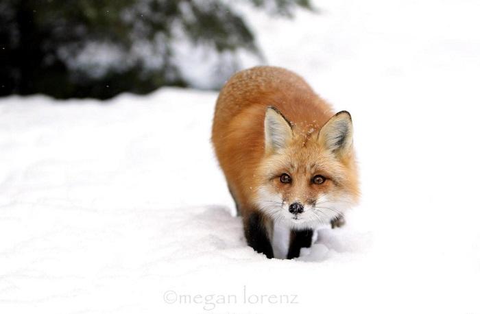 Как звери готовятся к зиме, фото 3