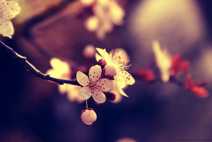 Cтихи о весне