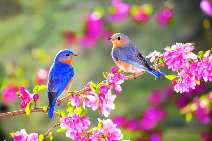 Пословицы и поговорки о весне - фото 1