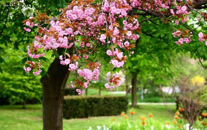 Пословицы и поговорки о весне - фото 2